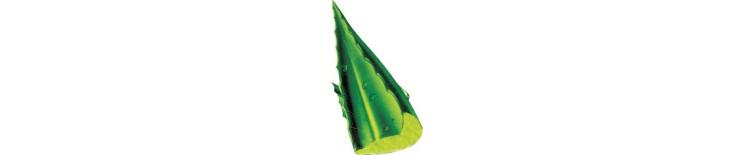 Aloe Vitae